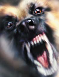 rabies01