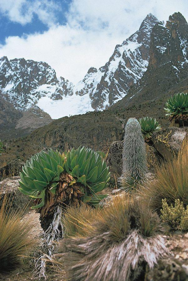 جنگل و پارک ملی کوهستان کنیا