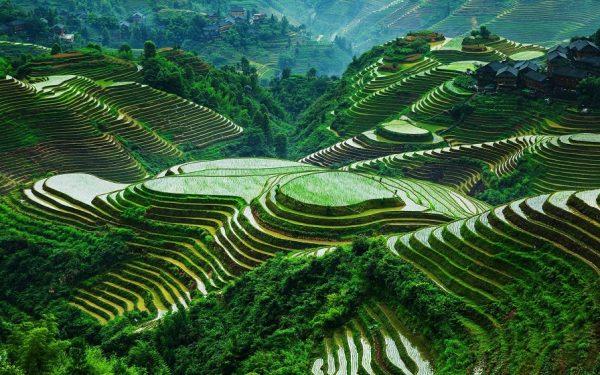 تراسهای شالیزارهای برنج در سلسله جبال فیلیپین