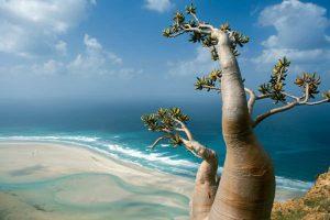 جزایر سوکترا