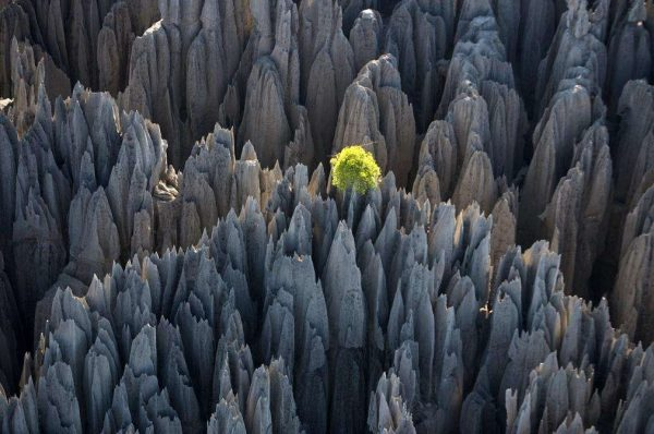 منطقۀ ویژۀ ذخیره گاه طبیعی سینجی دِ بماراها- Tsingy de Bemaraha
