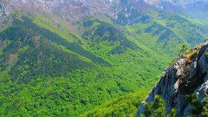 جنگلهای باستانی و کهنسال راش در ناحیه کارپات و بعضی مناطق اروپا